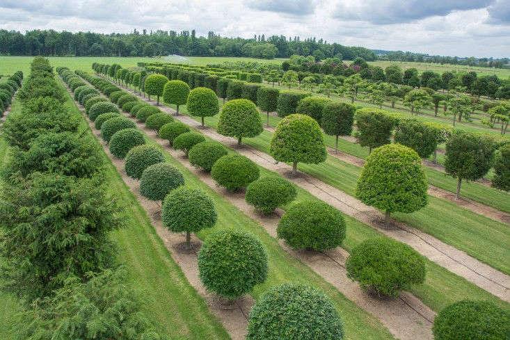 Consejos antes de plantar un árbol o arbusto