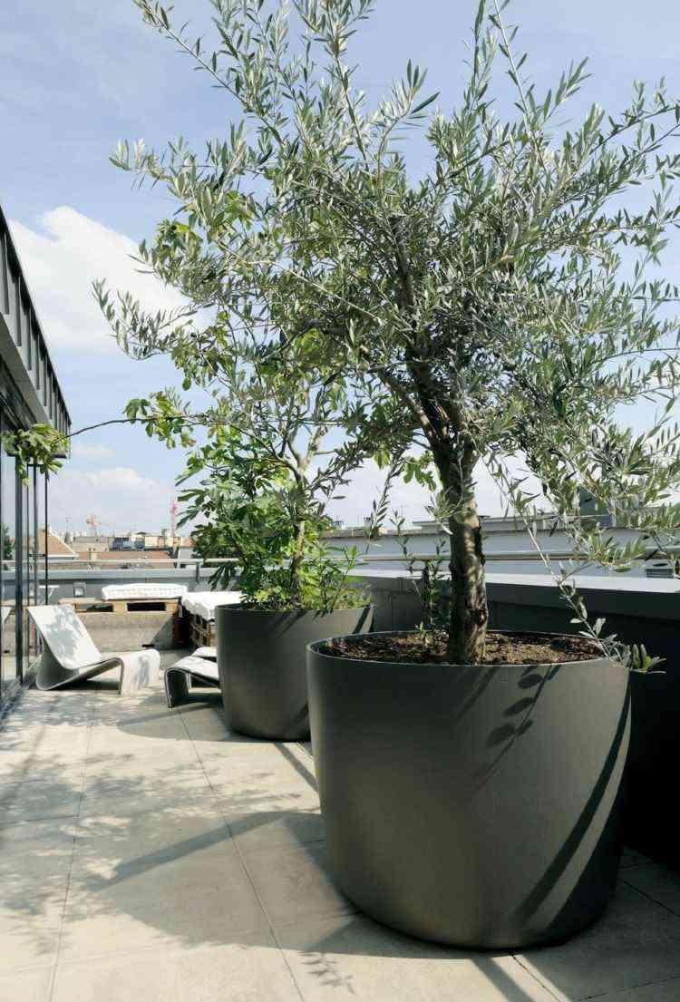 El Olivo: la planta perfecta para Terraza mediterránea