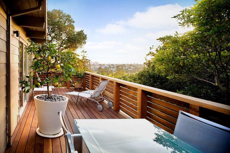 Mejores Árboles para plantar en Maceta en Balcones, Patios o Terrazas